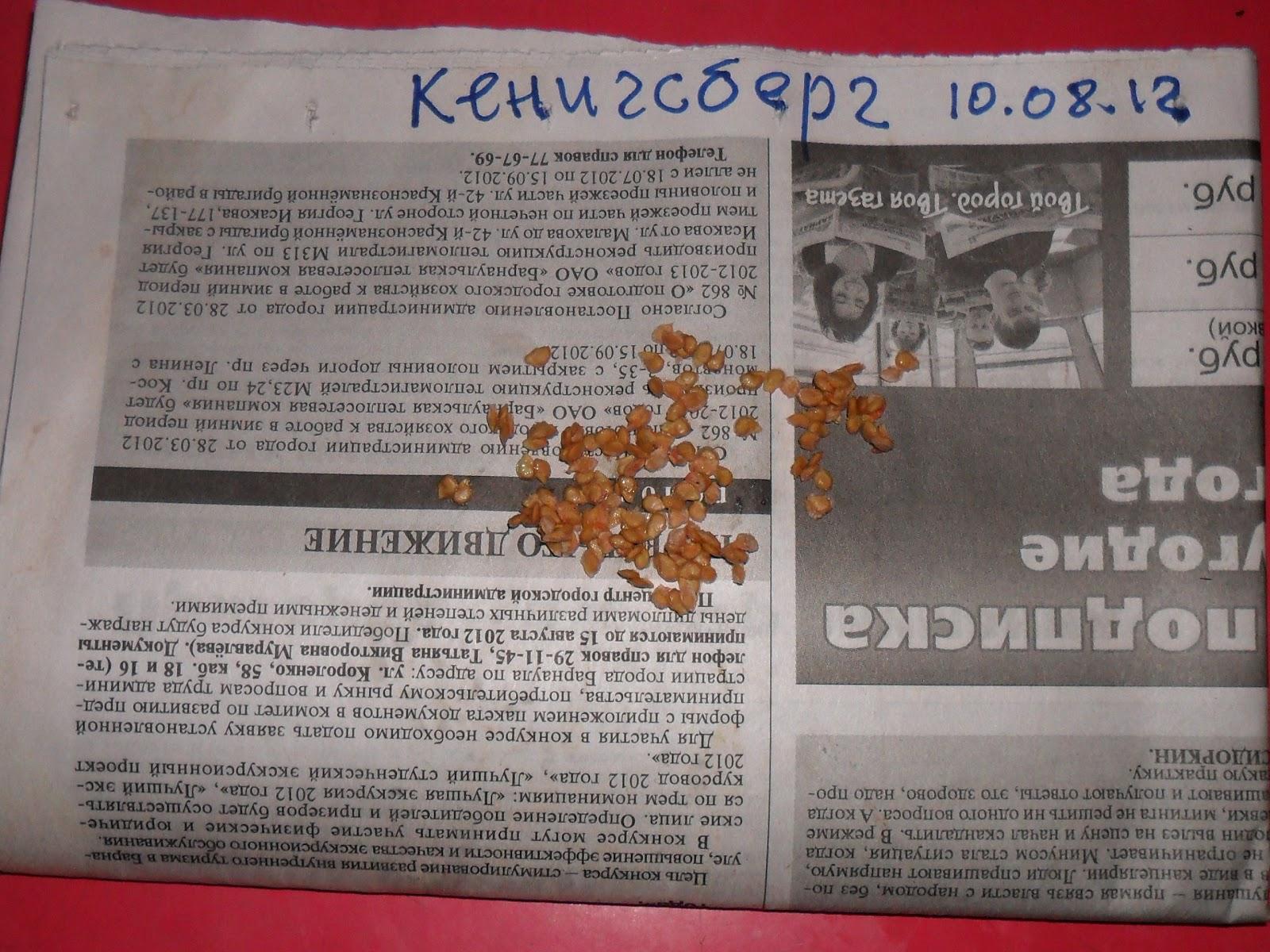 vkusniogorod – Как заготовить семена помидоров – перекладываю вторично