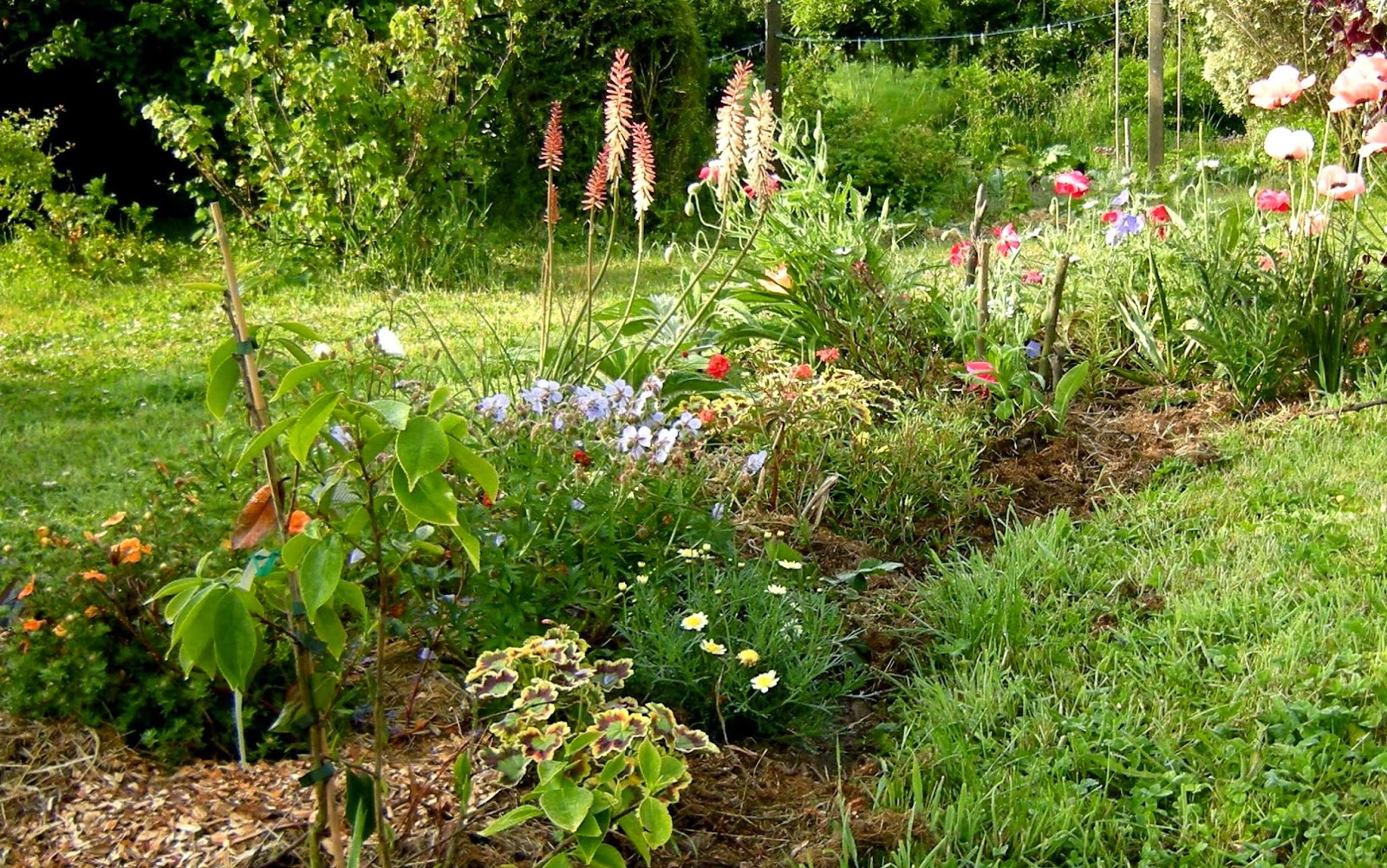 Mon jardin entre terre et mer tous aux abris for Tous aux jardins