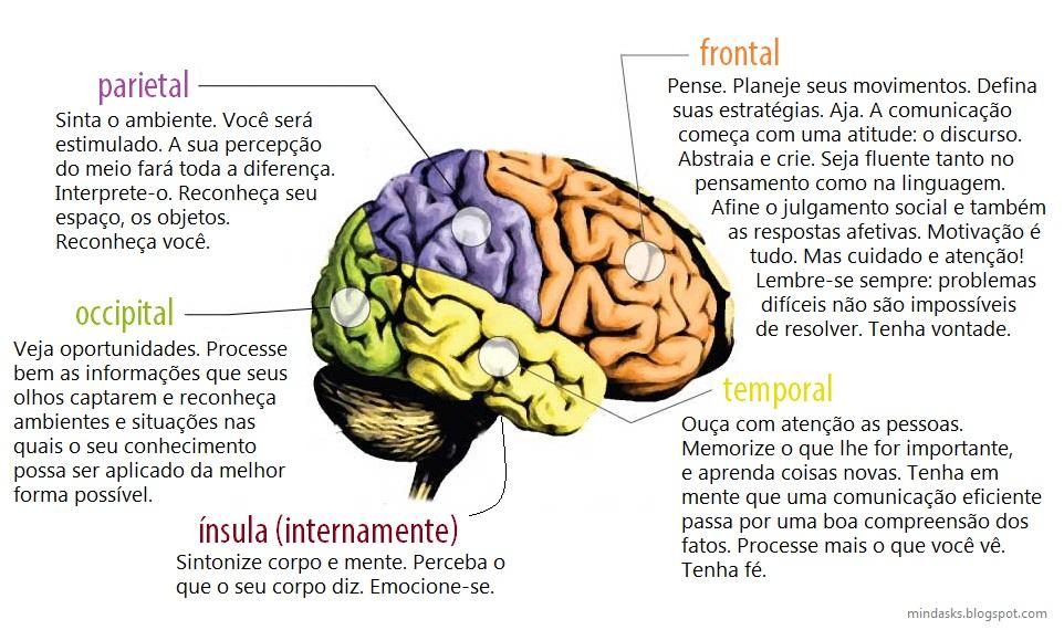 Encantador Anatomía De La Corteza Cerebral Composición - Imágenes de ...
