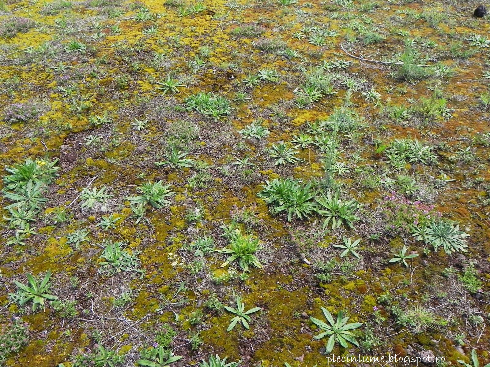 Plantele din crater
