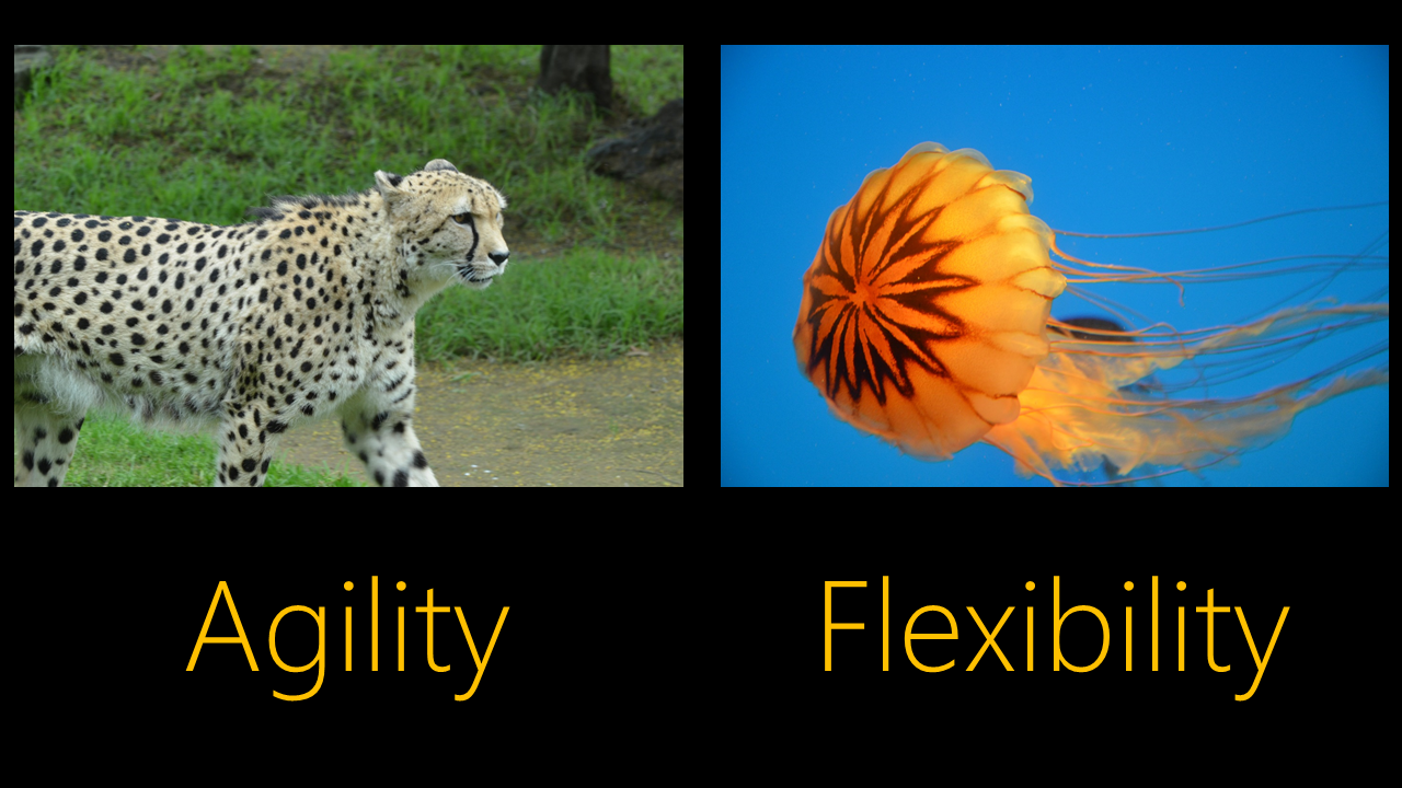 Which are the agile project management's disruptive features?