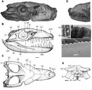 reptiles marinos gigantes de Argentina Dakosaurus