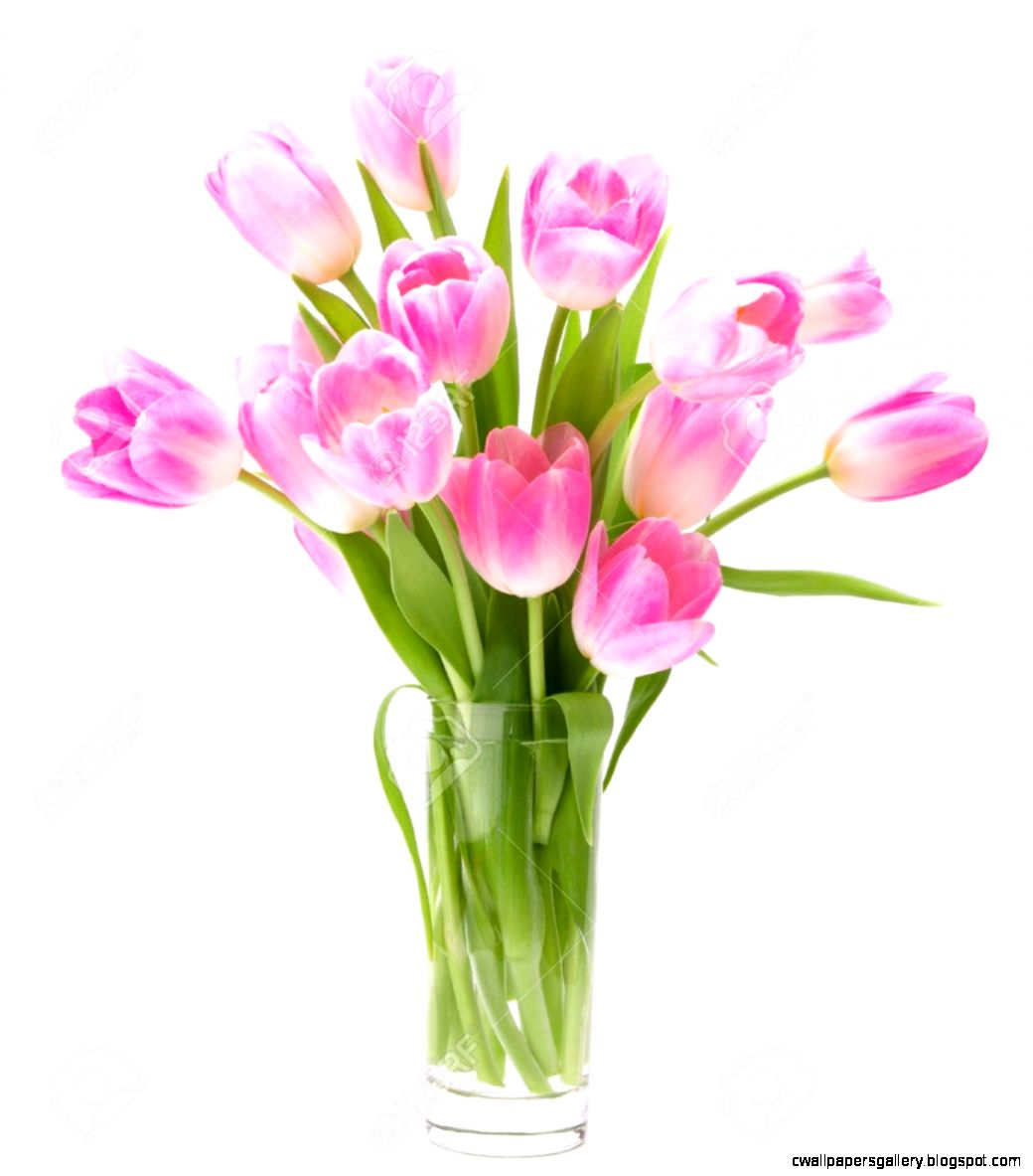 Pink Tulips Bouquet In Vase Isolated On White Background Stock