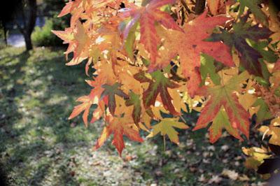 """<img src=""""autumn-colour3.jpg"""" alt=""""Autumn Colour"""" />"""