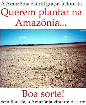 sem a floresta, a Amazônia vai virar um deserto.