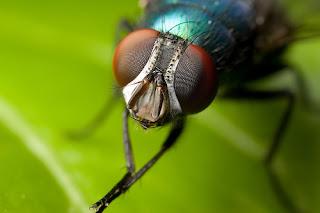 Eksperimen Menakjubkan Tentang Hadits Lalat