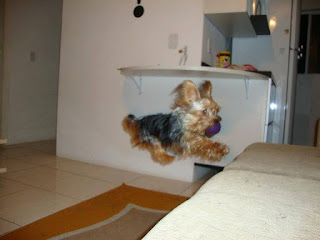 cão pequeno porte