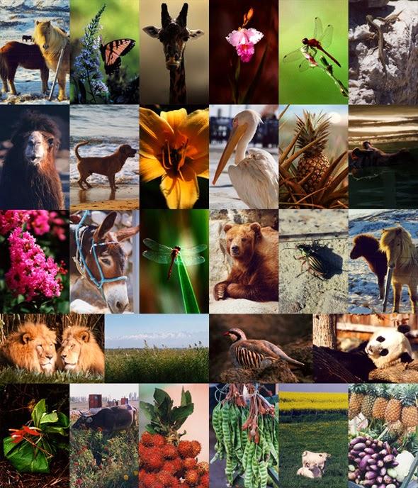 Gambar Flora Fauna Indonesia Macam Jenis Hewan Tumbuhan