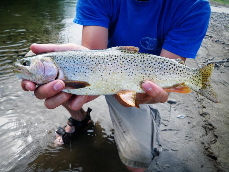 El día con más suerte de este pescado
