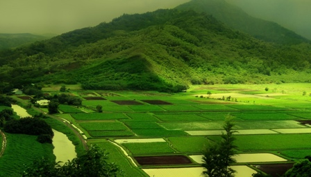 Download This Gree Nature Desktop Wallpapers 2011 And Backgrounds These Photos Start Spreading Go Green Slogan