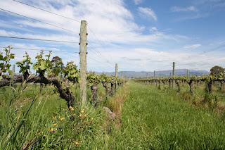 Will Lowe Blogtails Huia Vineyard New Zealand