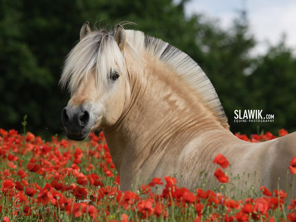 the horses Appearance: although horses have been selectively bred for centuries by  humans and their size and weight varies greatly from breed to breed, their  general.