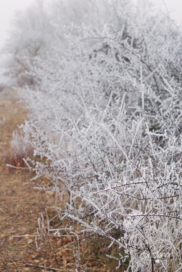 arbustos helados