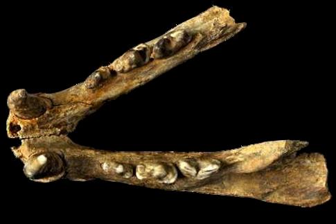 Restos prehistóricos en Galicia
