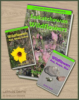 Invented Wildflower guidebooks - photo by Shelley Banks