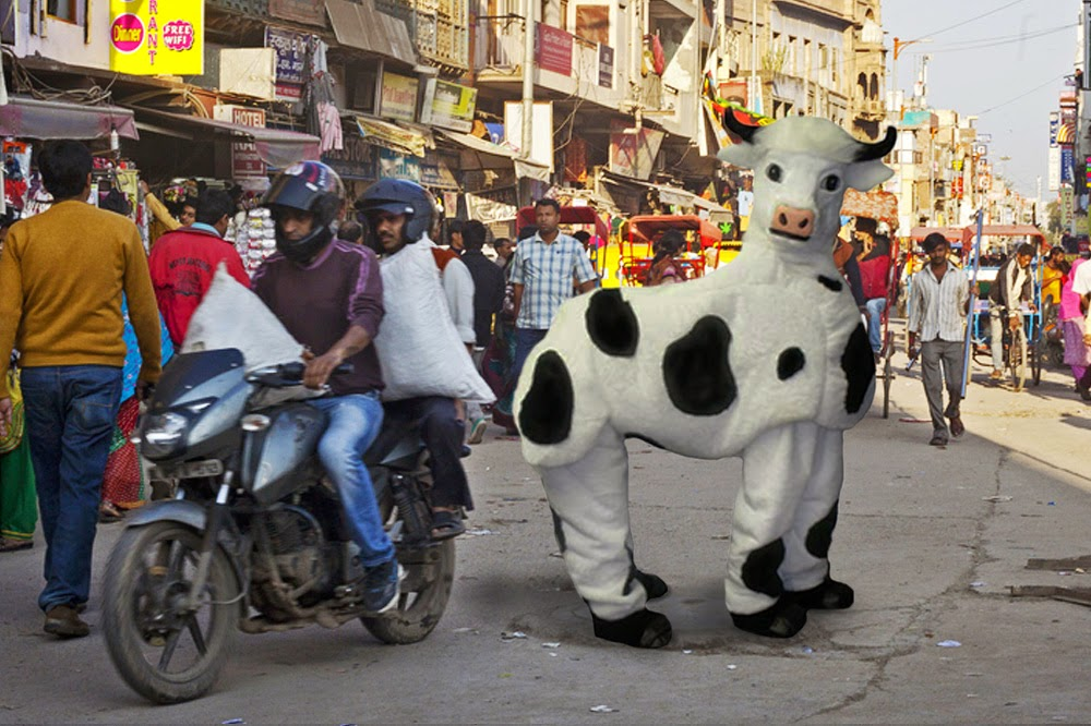 More and more Indian women dress up as cows to be less bothered