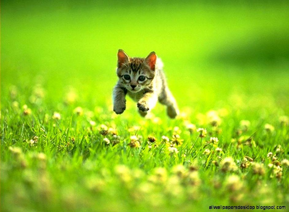 Cat Kitten Photo Look Hd Wallpaper All Wallpapers Desktop