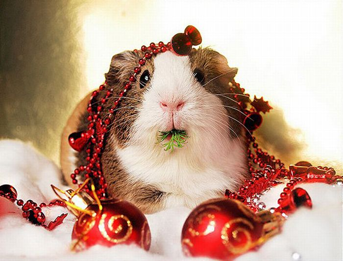 christmas animals cute amp funny new images funny and cute animals