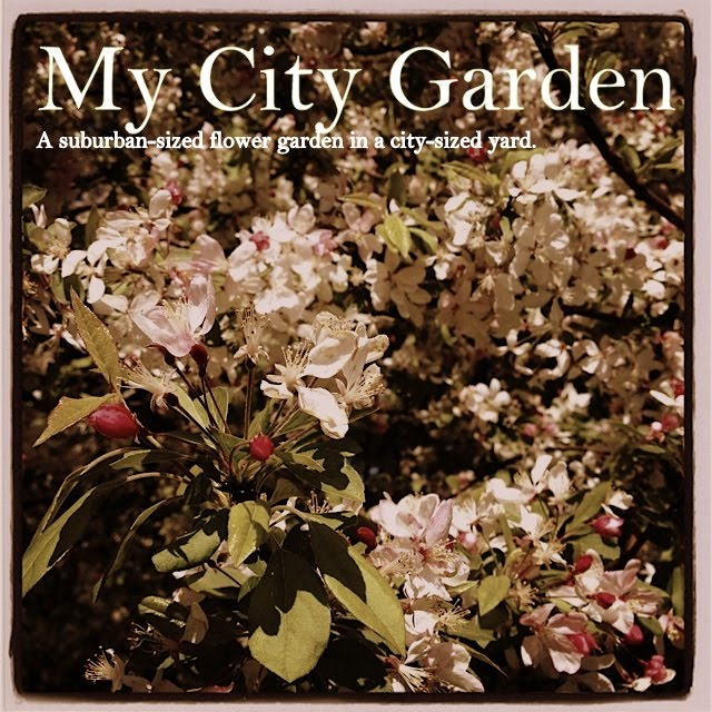 My City Garden