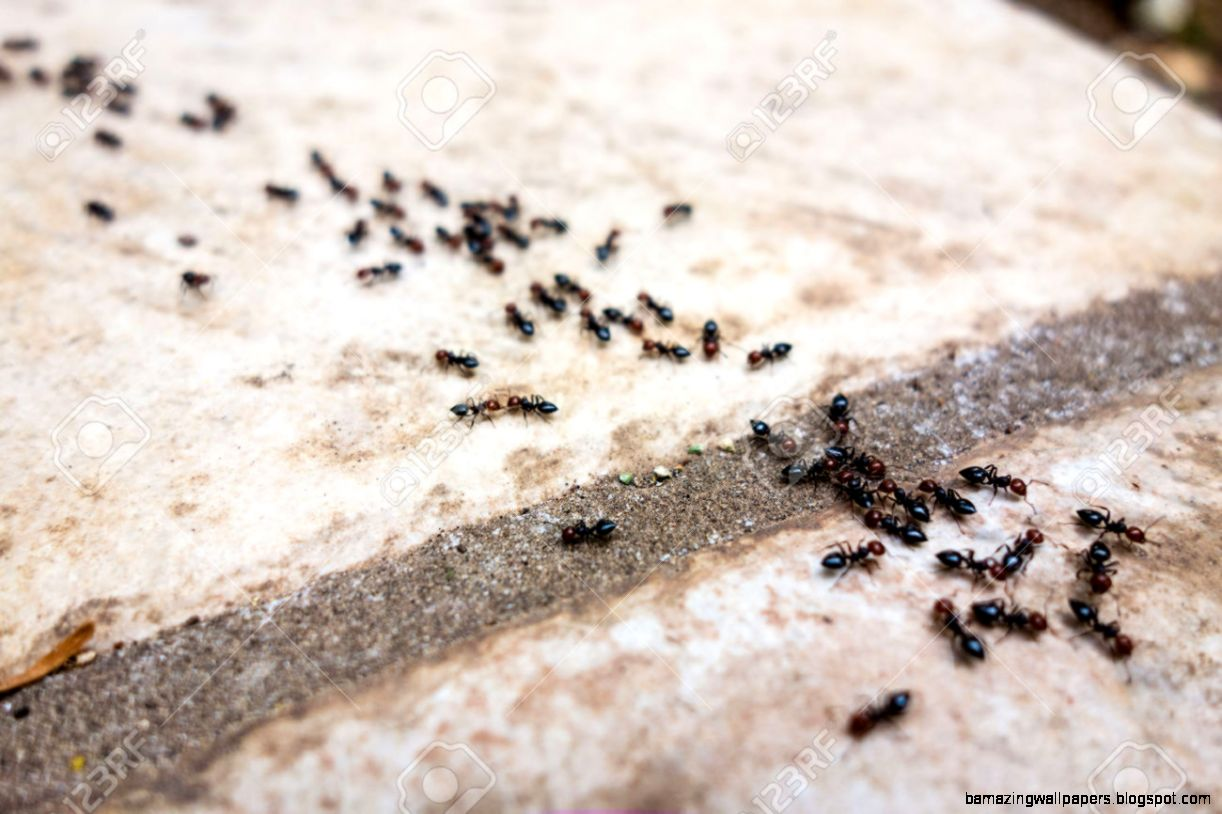 A Lot Of Ants Traveling In A Row On The Pavement Stock Photo