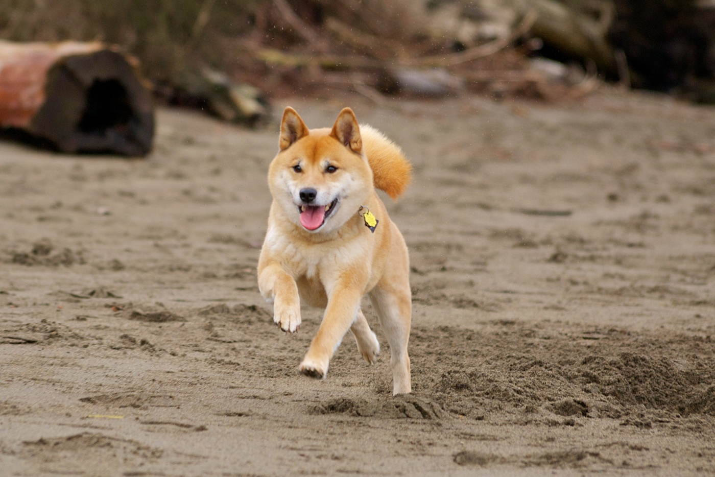 What Is Good Distance For Dogs To Walk