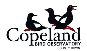 Check out Northern Ireland's only Bird Observatory