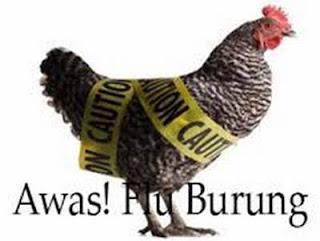 Makalah Lengkap Tentang Flu Burung (H5N1)