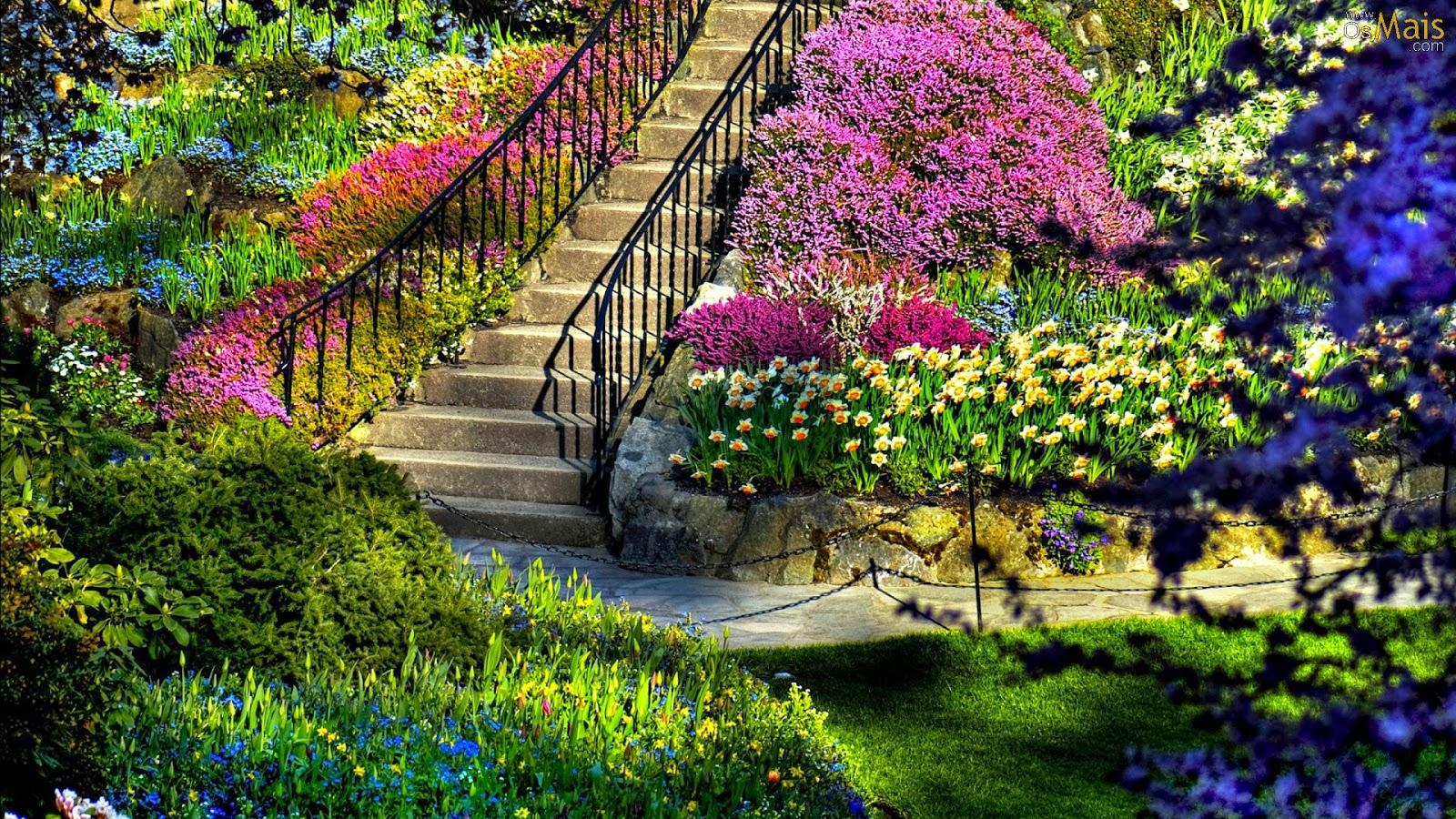 Saiba quais flores deixará seu jardim florido todos os dias em