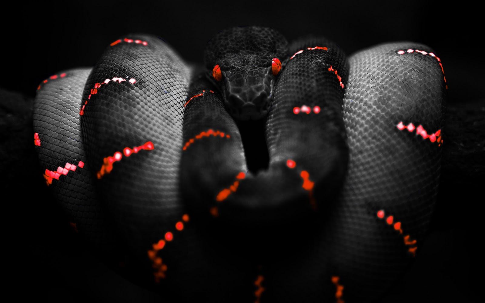 http://3.bp.blogspot.com/-Tk-GuLHdYc0/TcLxQe2N51I/AAAAAAAAAgA/SsK3yNU99yw/s1600/Photoshop_Snake_HD_wallpaper_red.jpg