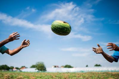 NÉBIH, fogyasztóvédelem, zöldség-gyümölcs forgalmazás, dinnye, görögdinnye,