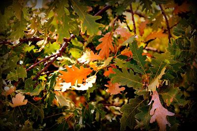 Melojo en otoño