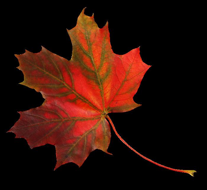 Осенние листья картинки цветные шаблоны для вырезания - 88bb
