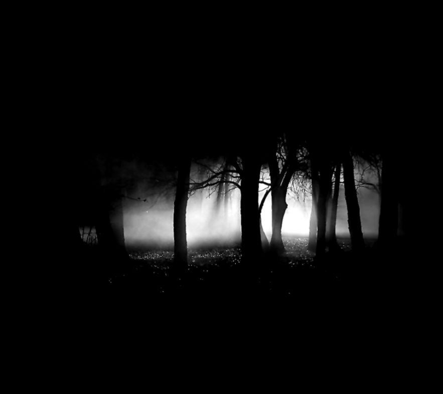 Dark trees HD Wallpapers   HDWallpapers360