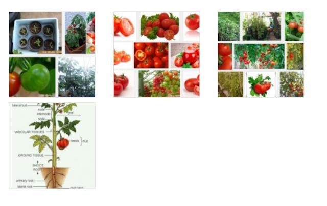 Masker Tomat Perih dan Gatal di Kulit, Mengapa Bisa Begitu? Ini Reviewnya!
