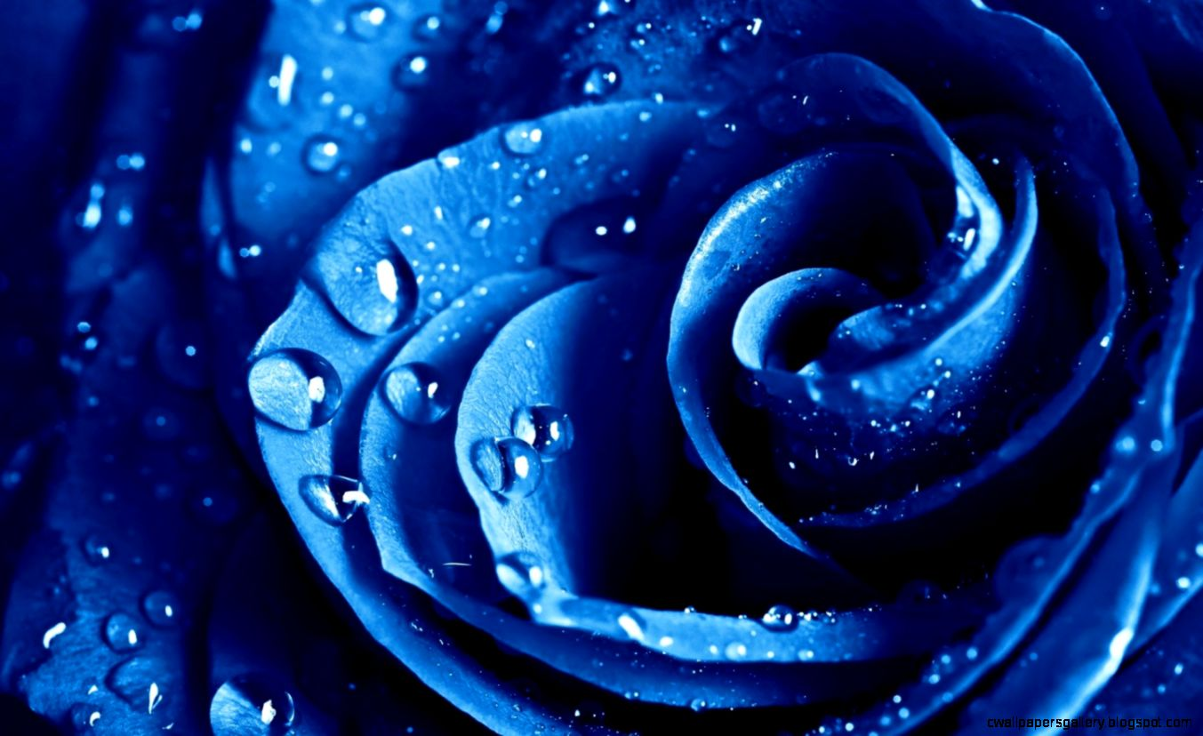 Blue Flowers Images   HD Wallpapers Backgrounds of Your Choice