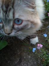 Bluebell in Jardin de Joie