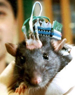 rat brains implanted with microchips to replace 'faulty' parts