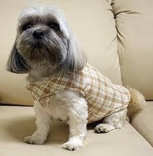 cachorro roupas, fantasias