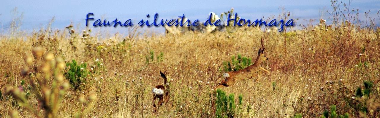 Fauna silvestre de Hormaza