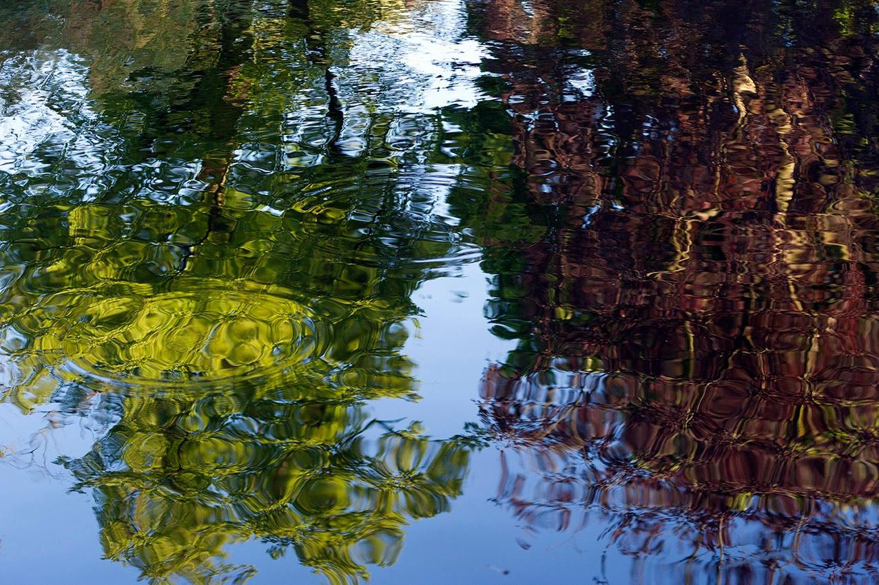 reflectie bomen in vijver