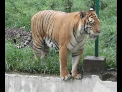 Dhaka Mirpur Zoo