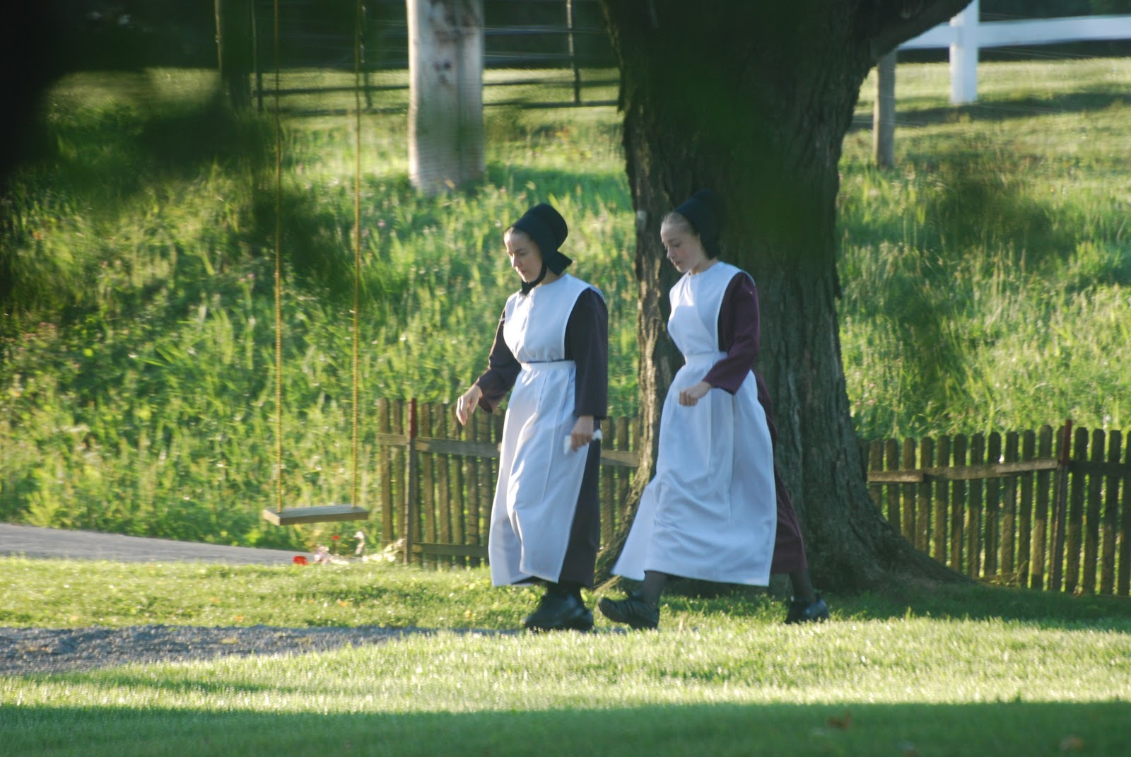 amish culture The amish: 10 things you might not know would introduce foreign values into their culture, says an article on the young center's website.