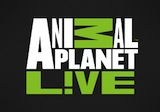 Animal Planet Live Roku Channel