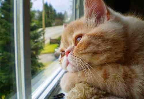 gambar kucing lucu galau - gambar kucing