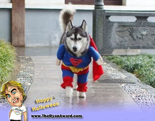 Superman Halloween Dog Costume