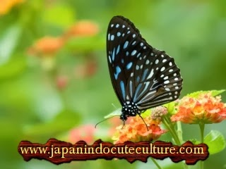 kupu-kupu cantik di taman