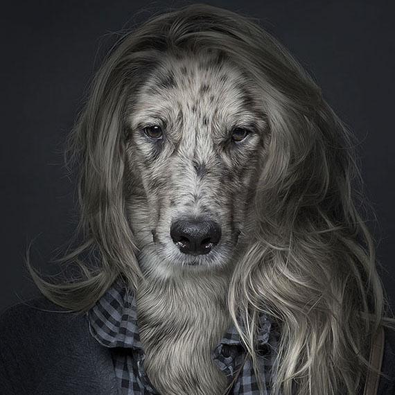 imagens, cães, criatividade, fotografia, arte, curiosidades, caes iguais pessoas, fotografia de animais, eu adoro morar na internet, fotografia de caes, caes peludos