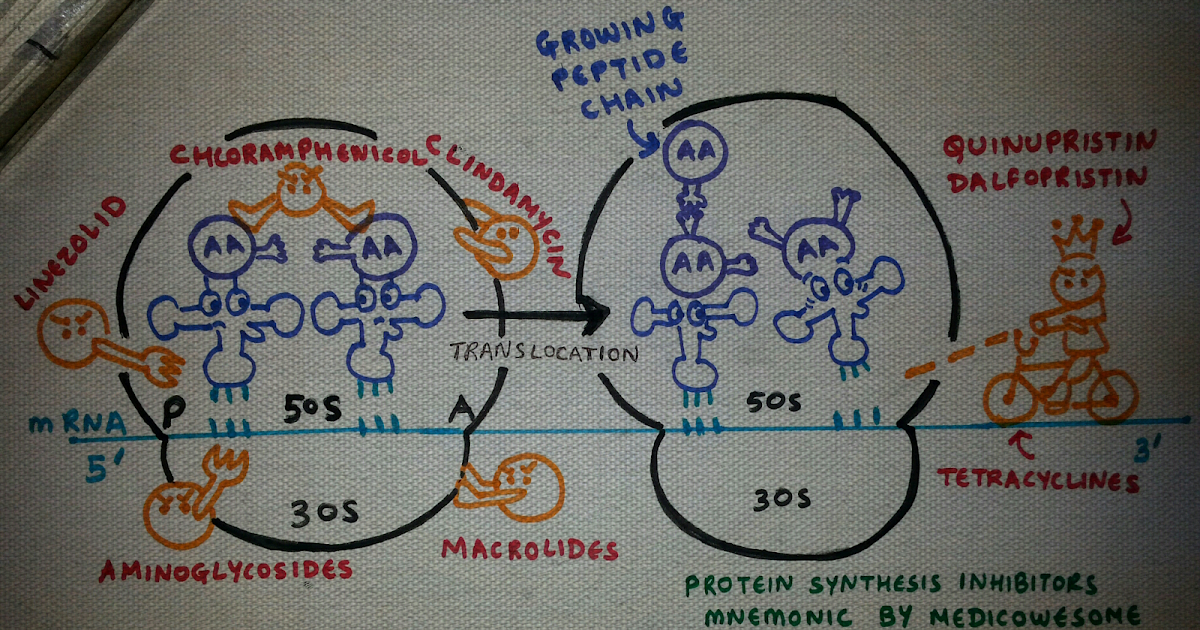 mechanism of protein synthesis pdf