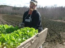 sarah planting 2500 leaf lettuce transplants
