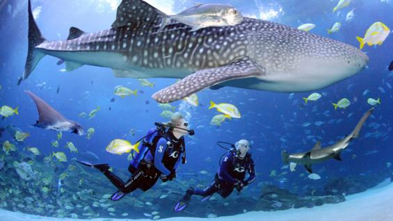 صورة رائهة لسمك القرش المرقط